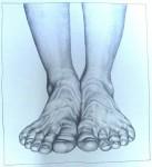 detail: behütete scham, 2006, pencil on paper on board, 33 x 170cm